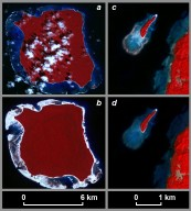 Uplift and Subsidence Associated with the Great Aceh-Andaman Earthquake of 2004