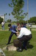 KENNEDY SPACE CENTER, FLA. -- Astronaut Frank Culbertson (with sunglasses) gets help moving a tree into its freshly dug hole near KSC Headquarters Building. The tree commemorates his stay on and safe return from the International Space Station as a member of the Expedition 3 crew. Culbertson served as commander for the four-month stay, August to December 2001. The tree planting is a tradition for the Expedition crews.