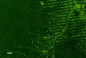 Deforestation of Rondonia, Brazil (with dates), from 1975 to 2001