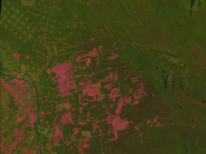 Bolivian Deforestation 1984-1998: Fast Dissolve without Dates
