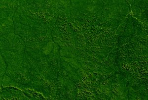 Deforestation of Rondonia, Brazil, from 1975 to 2001