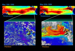 Sea Surface Temperature-Phytoplankton Correlation around the Galapagos in May 1998