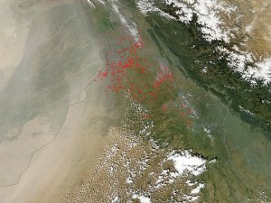 Agricultural Fires in Northwest India
