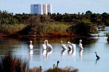 KENNEDY SPACE CENTER, FLA. -- A group of white pelicans spend a few moments relaxing in the water near the Vehicle Assembly Building at Kennedy Space Center. Found from British Columbia south to western Ontario, California and the Texas coast, white pelicans winter from Florida south to Panama. They prefer marshy lakes and coastal regions, and winter chiefly in coastal lagoons. White pelicans are one of 310 species of birds that inhabit the Merritt Island National Wildlife Refuge, which shares a boundary with KSC. The marshes and open water of the refuge also provide wintering areas for 23 species of migratory waterfowl, as well as a year-round home for great blue herons, great egrets, wood storks, cormorants, brown pelicans and other species of marsh and shore birds.