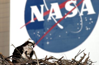 KENNEDY SPACE CENTER, FLA. -- A breeding osprey occupies a nest constructed on a speaker pole in the lower parking lot of the KSC Press Site. Eggs have been sighted in the nest. The NASA logo in the background is painted on an outer wall of the 525-foot-tall Vehicle Assembly Building nearby. Known as a fish hawk, the osprey selects sites of opportunity in which to nest -- from trees and telephone poles to rocks or even flat ground. In North America, it is found from Alaska and Newfoundland to Florida and the Gulf Coast. Osprey nests are found throughout the Kennedy Space Center and surrounding Merritt Island National Wildlife Refuge.