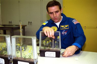 Participating in the Crew Equipment Integration Test (CEIT) at Kennedy Space Center is STS-87 Payload Specialist Leonid Kadenyuk of the National Space Agency of Ukraine (NSAU). Here, Cosmonaut Kadenyuk is inspecting flowers for pollination and fertilization, which will occur as part of the Collaborative Ukrainian Experiment, or CUE, aboard Columbia during its 16-day mission, scheduled to take off from KSC?s Launch Pad 39-B on Nov. 19. The CUE experiment is a collection of 10 plant space biology experiments that will fly in Columbia?s middeck and feature an educational component that involves evaluating the effects of microgravity on the pollinating Brassica rapa seedlings. Students in Ukrainian and American schools will participate in the same experiment on the ground and have several live opportunities to discuss the experiment with Kadenyuk in Space. Kadenyuk of the Ukraine will be flying his first Shuttle mission on STS-87