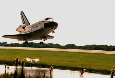 Orbiter Discovery startles a great white egret (below) next to runway 33 as it touches down at the Shuttle Landing Facility. Main gear touchdown was at 12:04 p.m. EST, landing on orbit 135. Discovery returns to Earth with its crew of seven after successfully completing mission STS-95, lasting nearly nine days and 3.6 million miles. The crew consists of Mission Commander Curtis L. Brown Jr.; Pilot Steven W. Lindsey; Mission Specialist Scott E. Parazynski; Mission Specialist Stephen K. Robinson; Payload Specialist John H. Glenn Jr., a senator from Ohio; Mission Specialist Pedro Duque of Spain, with the European Space Agency (ESA); and Payload Specialist Chiaki Mukai, M.D., with the National Space Development Agency of Japan (NASDA). The mission included research payloads such as the Spartan solar-observing deployable spacecraft, the Hubble Space Telescope Orbital Systems Test Platform, the International Extreme Ultraviolet Hitchhiker, as well as the SPACEHAB single module with experiments on space flight and the aging process