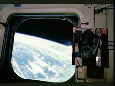 STS-30 aft flight deck onboard view of overhead window, Earth limb, cow photo