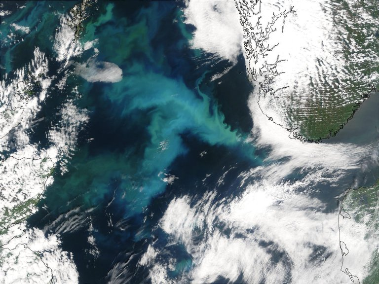 Phytoplankton Bloom in North Sea