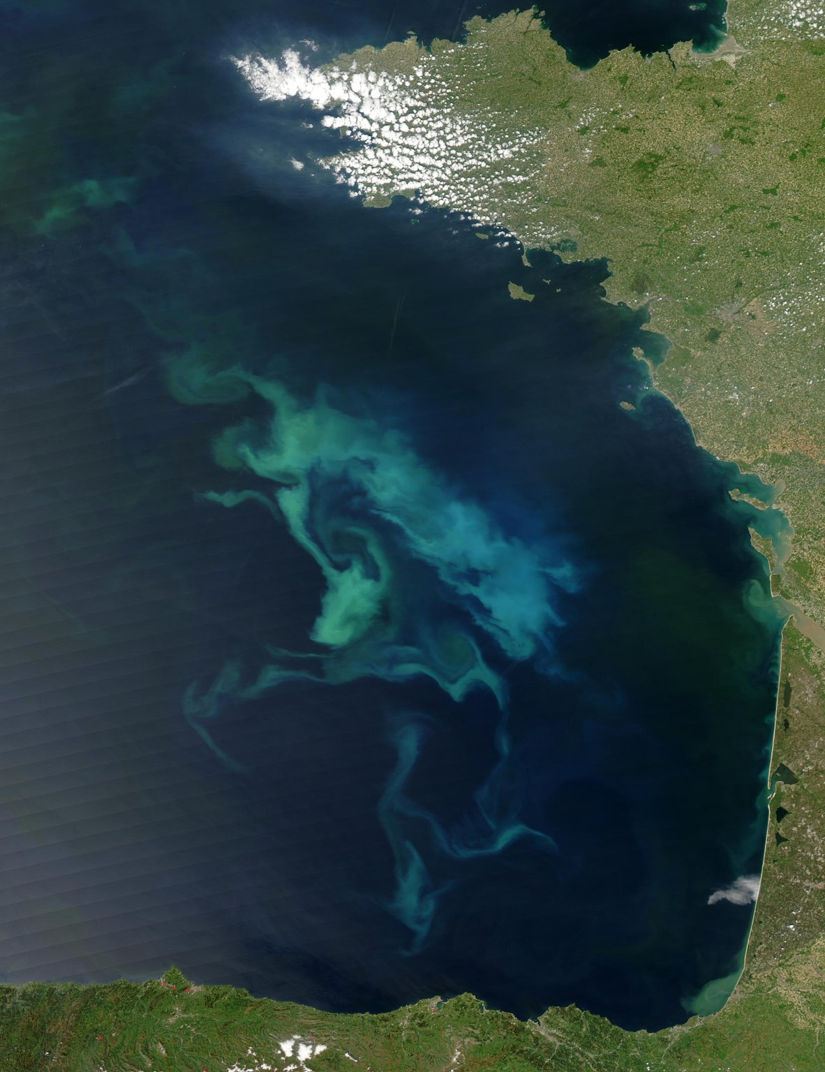 Bay of Biscay in Bloom