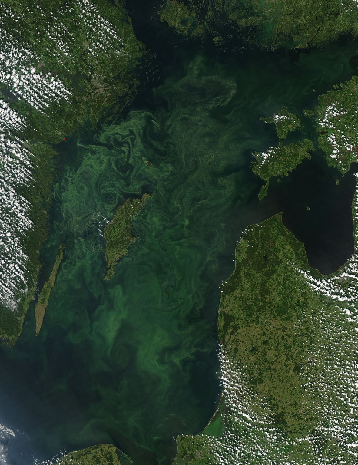 Summer Bloom in the Baltic Sea